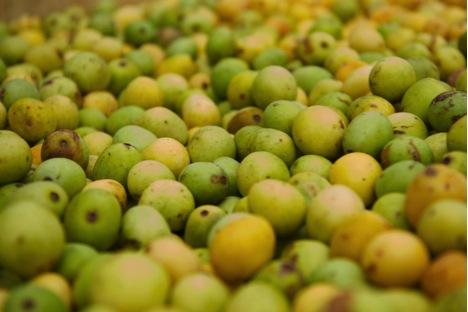 marula fruit bunch